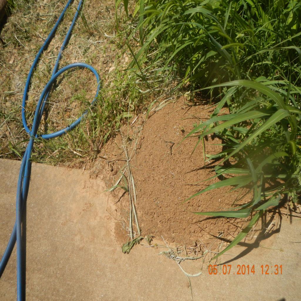 termites colony damage