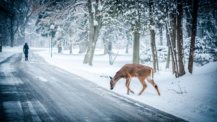 snow-winter-christmas-deer-large