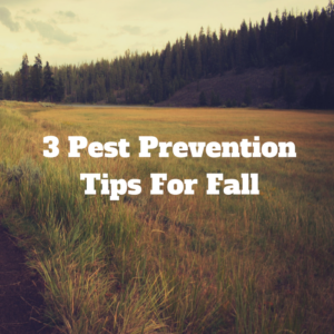 Pest Prevention Tips For Fall