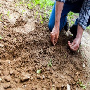 Protecting Your Garden Naturally