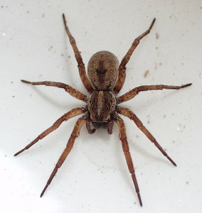 Wolf Spider Protection