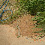 termite colony damage Tennessee