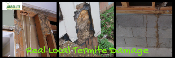 Real pictures of local damage from termites