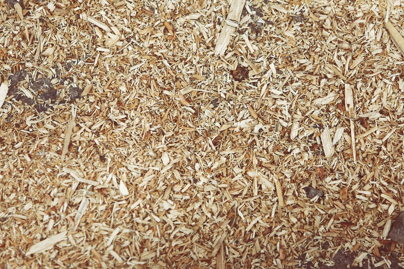 wood-chips- Termites